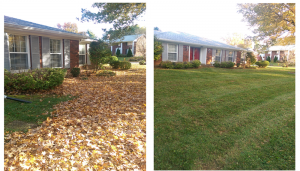Spring and Fall Yard Leaf Cleanups