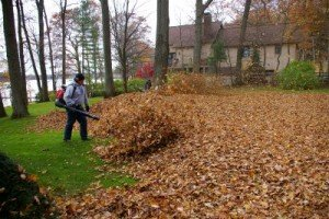 Spring & Fall Leaf Cleanup - Cape Cod - Foley Landscape Services
