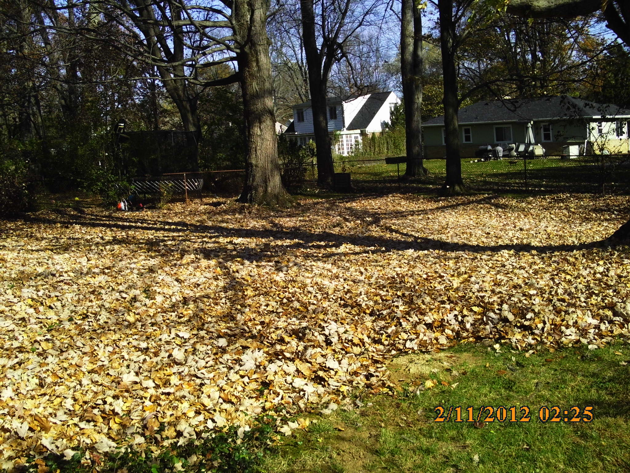 and fall yard leaf cleanups foley landscape services